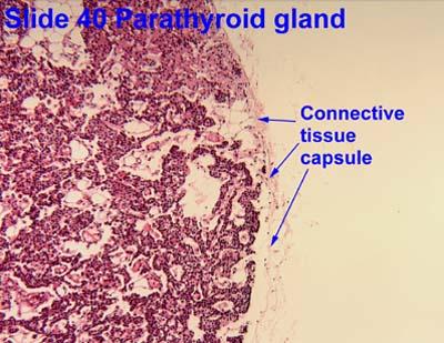symptom of gallbladder problems post pregnancy